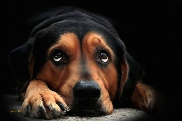 Dog Print featuring the digital art Puppy Dog Eyes by Christina Rollo