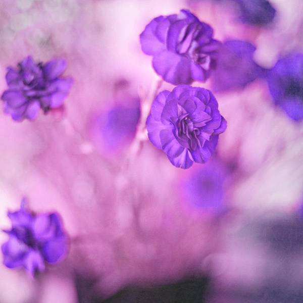 Pretty Flowers Print featuring the photograph Purple Flowers by Marisa Horn