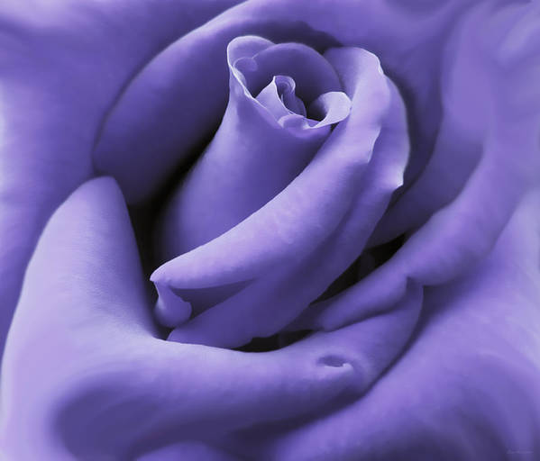 Rose Print featuring the photograph Purple Velvet Rose Flower by Jennie Marie Schell