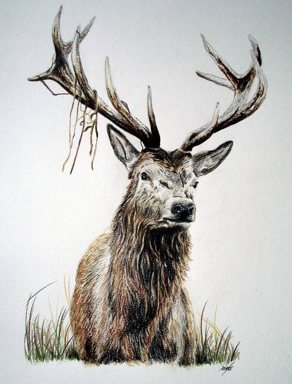 deer isle chatrooms Bwcacom is a great resource to aid in your planning and enjoyment of the boundary  chat rooms (0 chatting) |  deer isle and stonington there is my sister's.