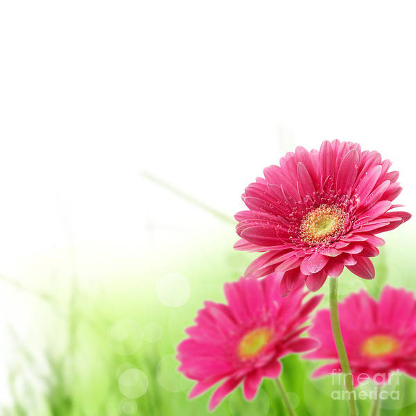 Red Spring Flowers Print featuring the photograph Red Spring Flowers by Boon Mee