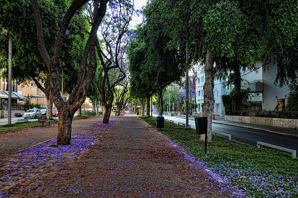 Foliage Print featuring the photograph Rothschild Boulevard by Ron Shoshani