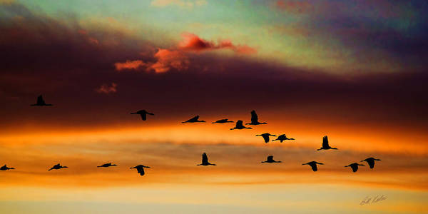 Bill Kesler Photography Print featuring the photograph Sandhill Cranes Take The Sunset Flight by Bill Kesler