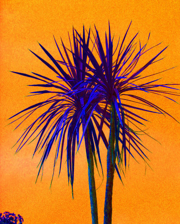 Palm Print featuring the photograph Silhouette On Orange by Margaret Saheed