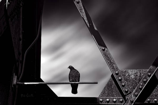 Pigeon Print featuring the photograph Sitting On A Stick by Bob Orsillo