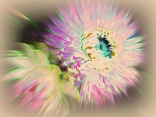 Strawflower Print featuring the photograph Strawflower Awakening by Shirley Sirois