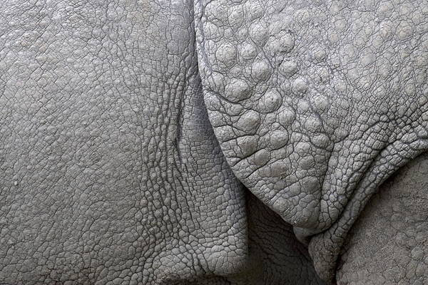 Rhino Print featuring the photograph Structure Of The Skin Of An Indian Rhinoceros In A Zoo In The Netherlands by Ronald Jansen