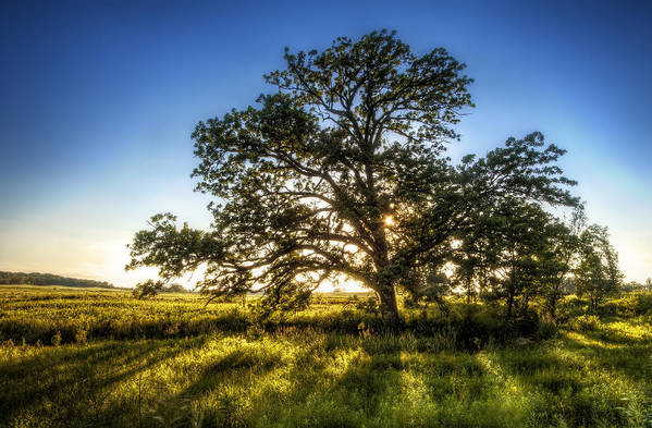 Sunset Print featuring the photograph Sunset Oak by Scott Norris