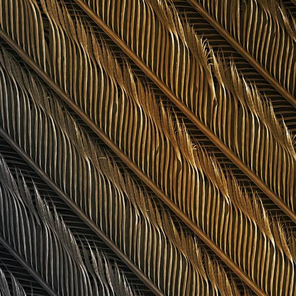 Bird Print featuring the photograph Swallow Feather Detail, Sem by Power And Syred
