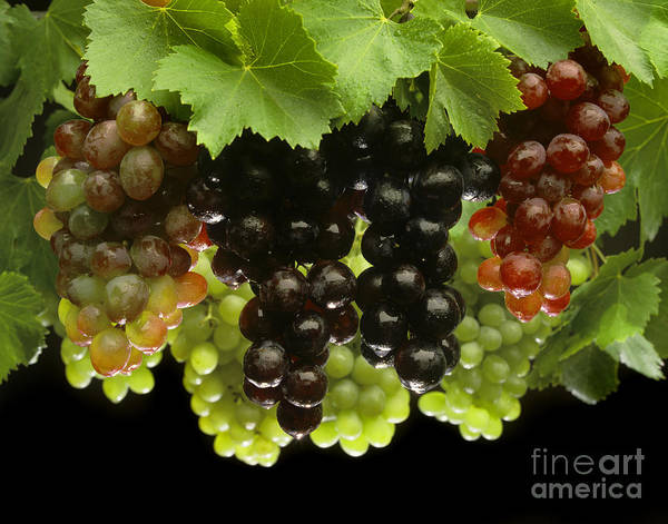 Craig Lovell Print featuring the photograph Table Grapes by Craig Lovell