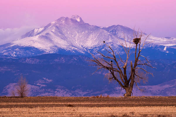 Bald Eagle Print featuring the photograph The Eagles And The Peaks by Bryce Bradford