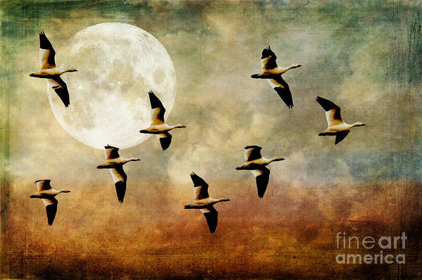 Geese Print featuring the photograph The Flight Of The Snow Geese by Lois Bryan
