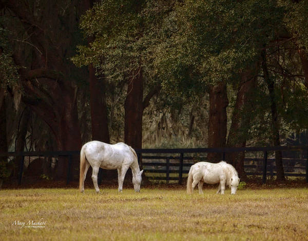 The Horse And The Pony Print featuring the photograph The Horse And The Pony - Standard Size by Mary Machare