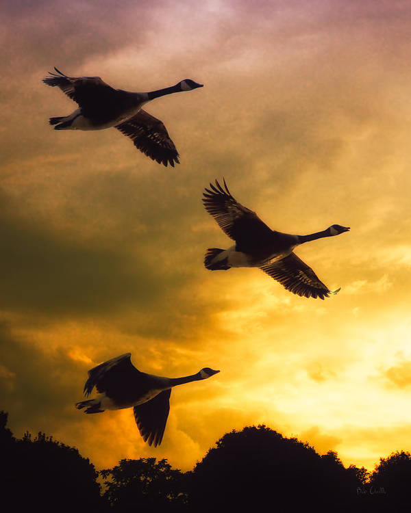 Geese Print featuring the photograph The Journey South by Bob Orsillo