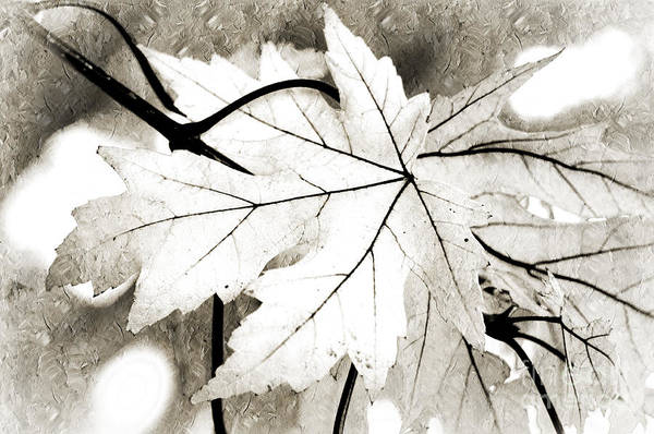 Autumn Print featuring the photograph The Mysterious Leaf Abstract Bw by Andee Design