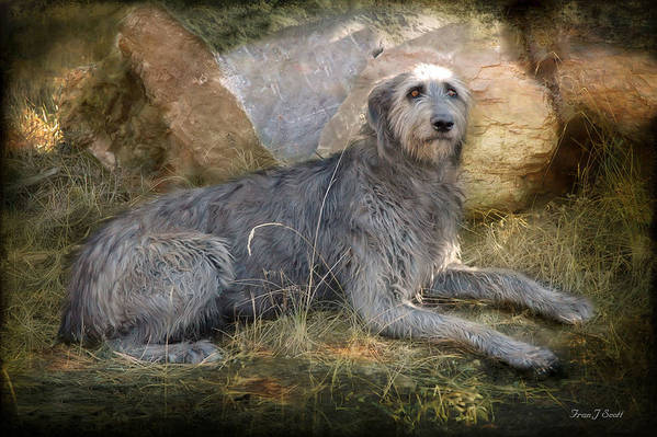 Dogs Print featuring the photograph The Wolfhound by Fran J Scott