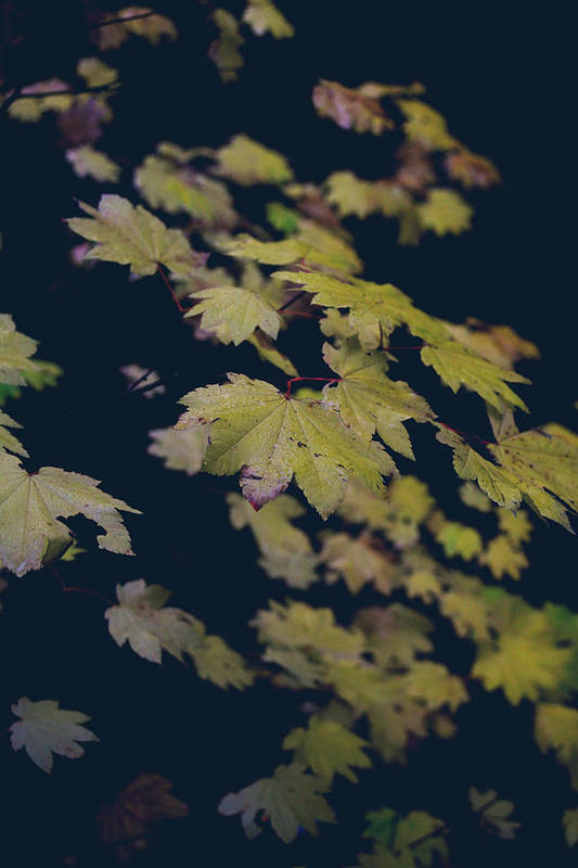 Leaves Print featuring the photograph To Have You Near by Laurie Search