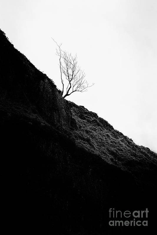 Beautiful Scotland Print featuring the photograph Tree In Mist II by John Farnan