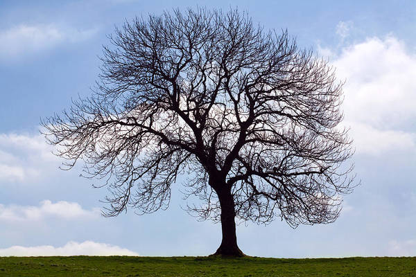 Tree Print featuring the photograph Tree Silhouette by Natalie Kinnear