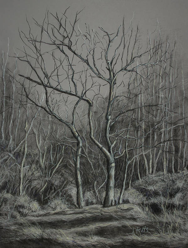 Trees Print featuring the drawing Trees Along The Greenway by Janet Felts