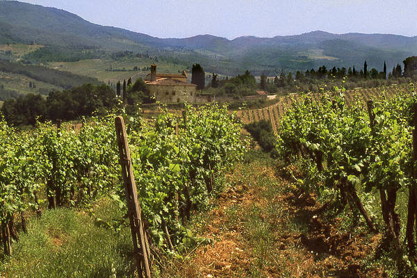 Wine Print featuring the photograph Tuscany Vineyard No.2 by Mel Felix