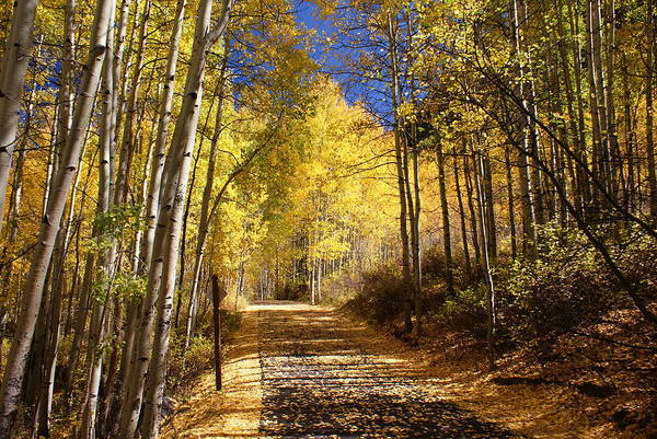 Landscape Print featuring the photograph Vail Colorado Fall Bike Path by Michael J Bauer