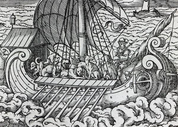 Ship; Boat; Animals; Dogs; Dog; Oars; Transporting; Sailing; Sail; Voyage; Sea; Waves; Rowing; Transportation; Vikings; Rough Seas; Medieval Print featuring the drawing Viking Ship by German School