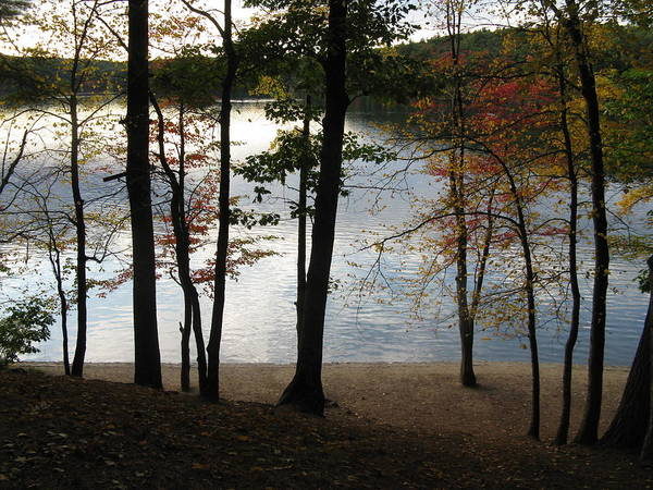 Autumn Print featuring the photograph Walden Pond In Autumn by Sheila Savage