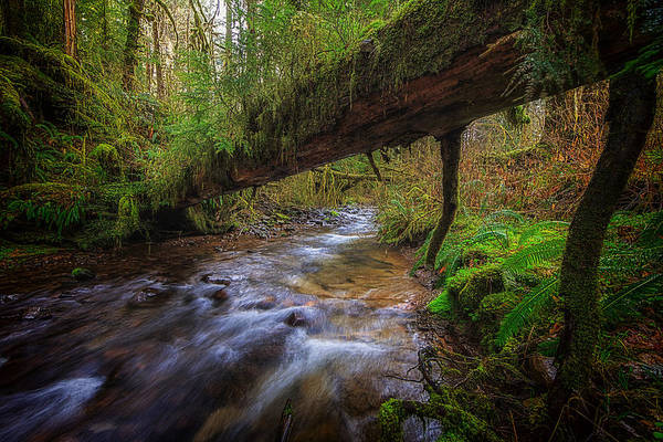 Oregon Print featuring the photograph West Humbug Creek by Everet Regal