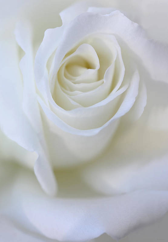 Rose Print featuring the photograph White Rose Floral Whispers by Jennie Marie Schell