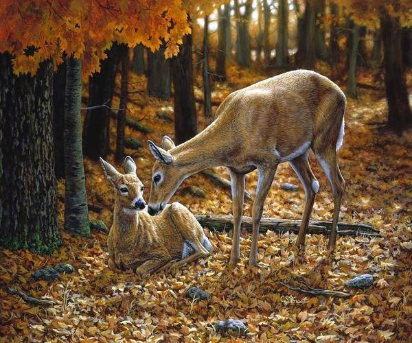 Deer Print featuring the painting Whitetail Deer - Autumn Innocence 2 by Crista Forest