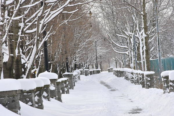 Winter Print featuring the photograph Winter by Frederico Borges