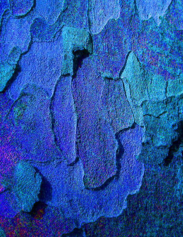 Bark Print featuring the photograph Winter London Plane Tree Abstract 4 by Margaret Saheed