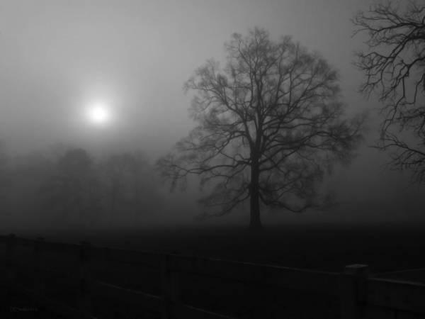 Landscape Print featuring the photograph Winter Oak In Fog by Deborah Smith