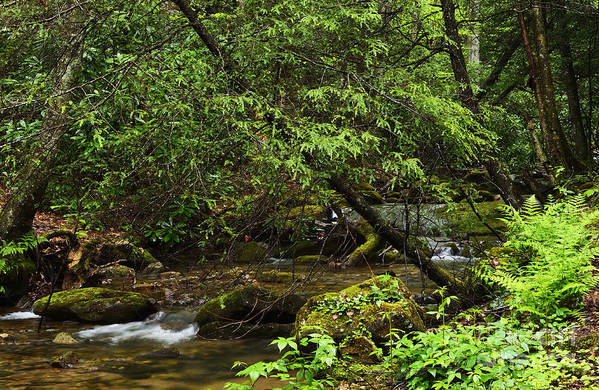 Rushing Mountain Stream Print featuring the photograph Rushing Mountain Stream by Thomas R Fletcher