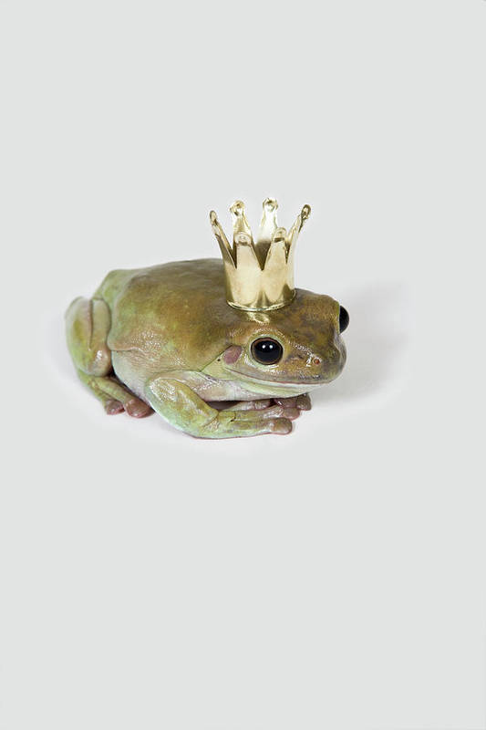 Vertical Print featuring the photograph A Frog Wearing A Crown, Studio Shot by Paul Hudson