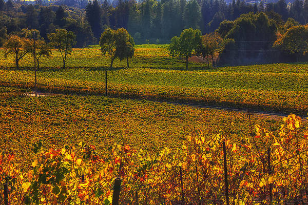 Autumn Print featuring the photograph Autumn Vineyards by Garry Gay