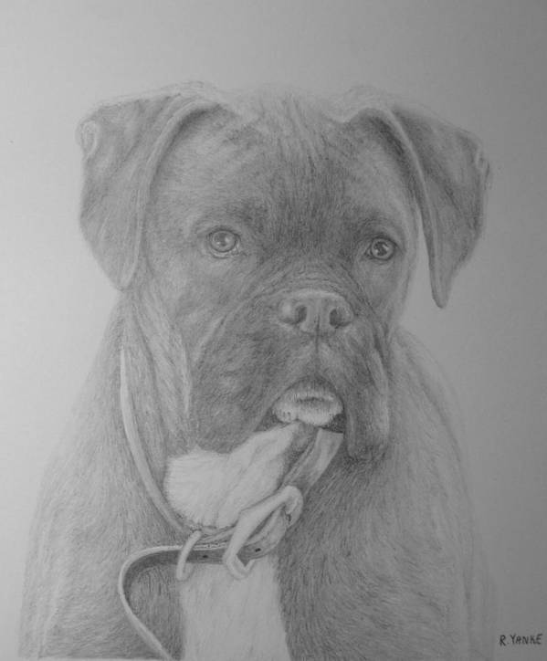 Boxer Print featuring the drawing Boxer Buddy by Rick Yanke