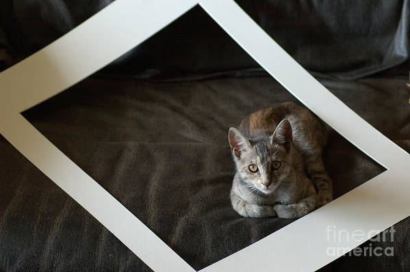 Cat Print featuring the photograph Cat In A Frame by Micah May