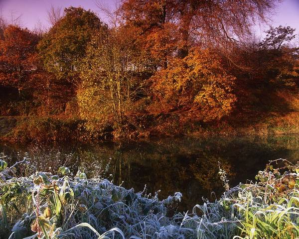 Autumn Print featuring the photograph Deciduous Woods, In Autumn With Frost by The Irish Image Collection
