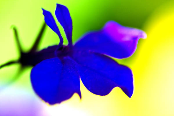 Blue Flower Print featuring the photograph Deeply Blue by Marie Jamieson