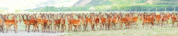 Deer Print featuring the photograph Deers by MotHaiBaPhoto Prints
