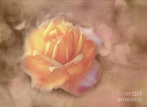 Rose Print featuring the photograph Faded Memories by Judi Bagwell