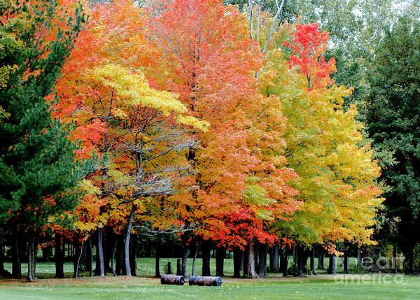 Autumn Colors Print featuring the photograph Fall In Michigan by Optical Playground By MP Ray