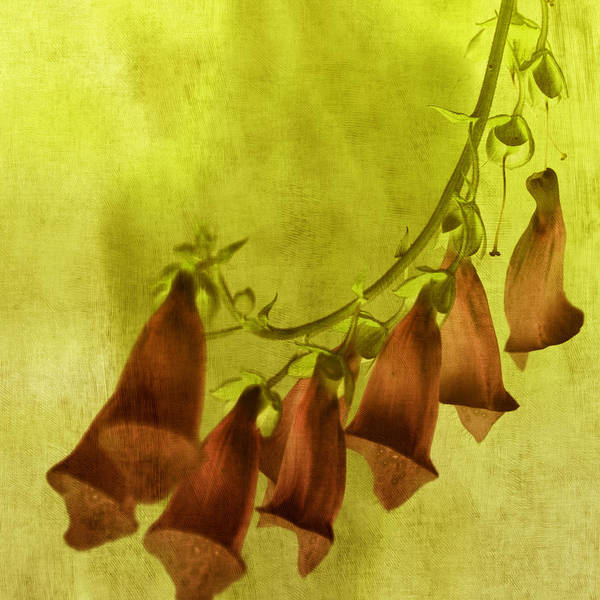 Tangerine Tango Print featuring the photograph Fancy Foxglove by Bonnie Bruno