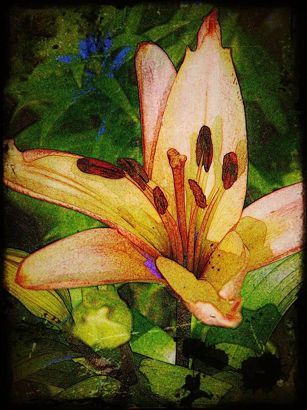 Earthy Print featuring the photograph First Asiatic by Chris Berry