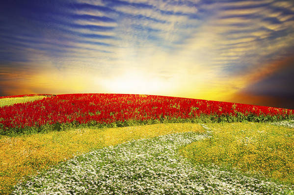 Background Print featuring the photograph Floral Field On Sunset by Setsiri Silapasuwanchai