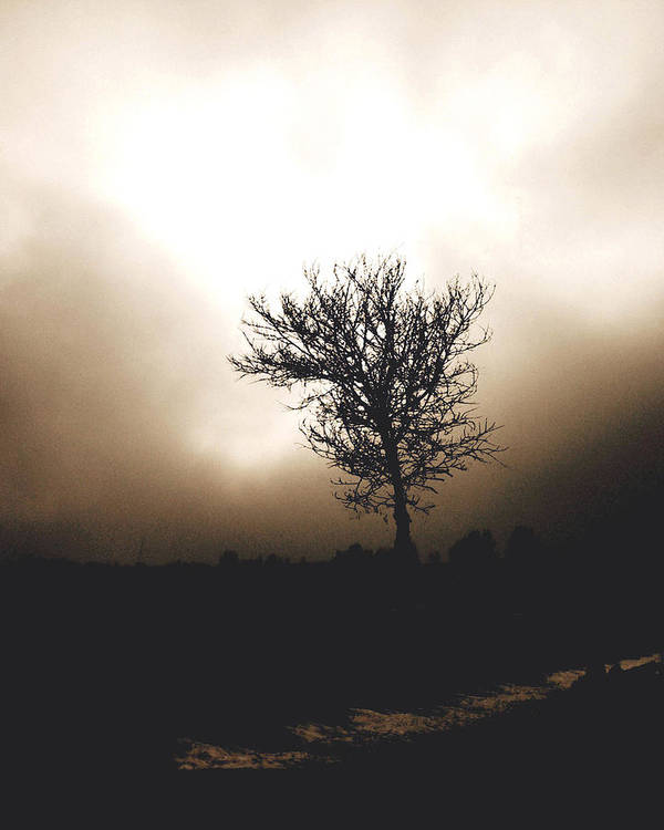 Landscape Photography Print featuring the photograph Foggy Winter Morning by Ann Powell