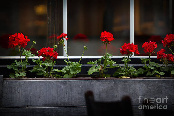 Antwerpen Print featuring the photograph Geranium Flower Box by Doug Sturgess