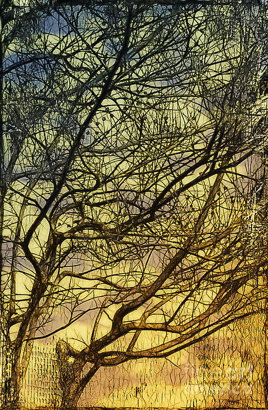 Gothic Print featuring the photograph Ghosts Of Crape Myrtles by Judi Bagwell